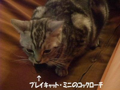 2009年7月リベンジ4.JPG