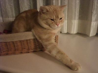 2009年9月控え2.JPG