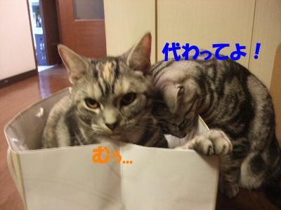 2010年2月ねんりんやリ4.JPG