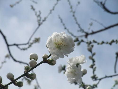 2010年3月世田谷3.JPG
