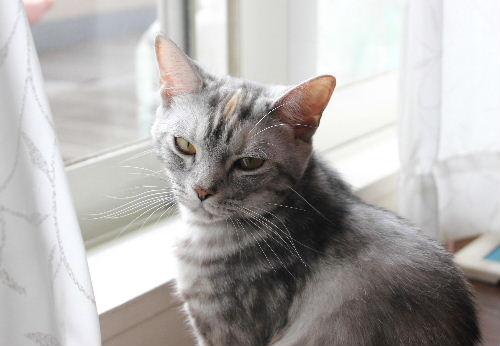 2010年6月子猫0.JPG