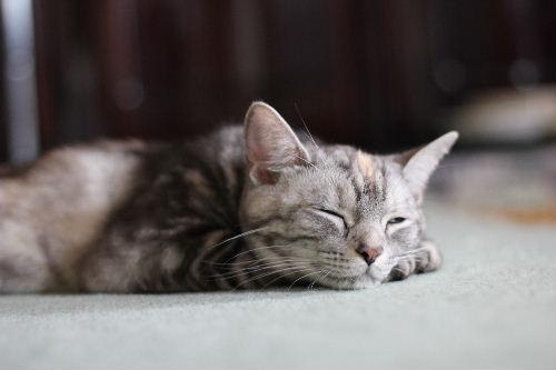 2010年6月子猫1.JPG