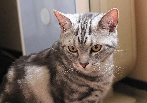 2010年6月子猫4.JPG
