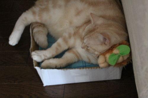 2010年9月枕2.JPG