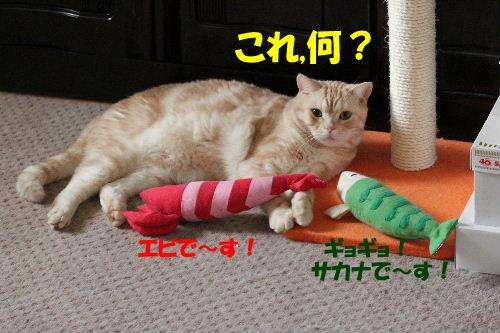 2011年10月えさ1-3.JPG