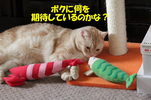 2011年10月えさ1-4.JPG