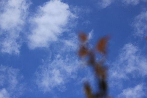 2011年10月かえ1.JPG
