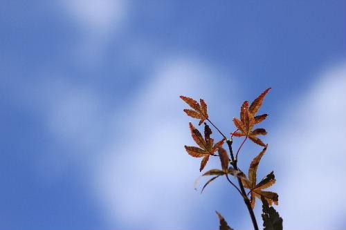 2011年10月かえ1-2.JPG