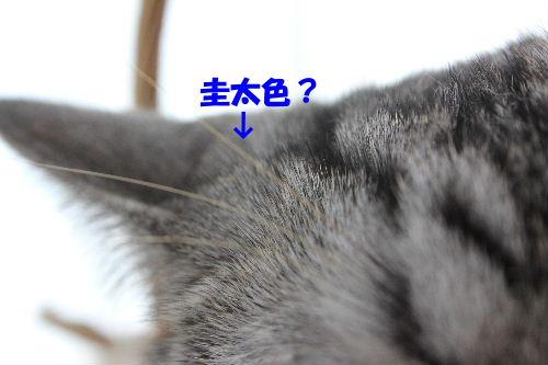 2011年10月かえ3-4.JPG