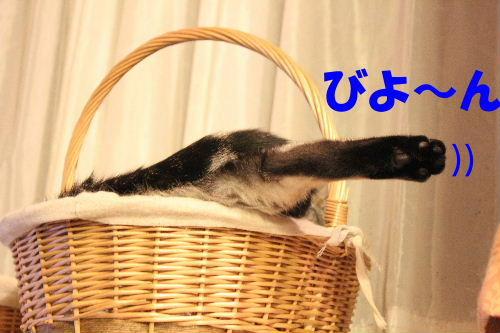 2011年10月はみ3.JPG