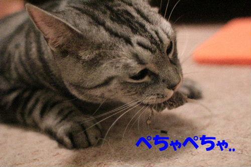 2011年10月エサ7.JPG