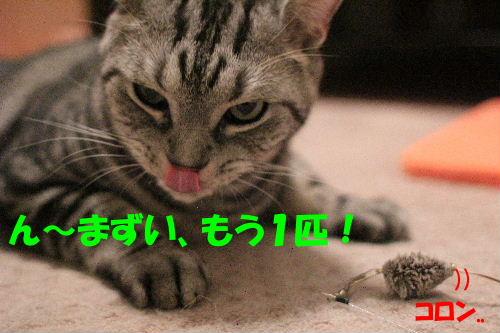 2011年10月エサ9.JPG