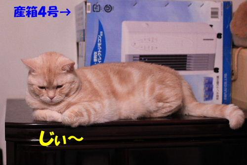 2011年10月鏡2.JPG