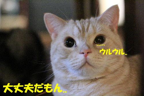 2011年10月黒目4.JPG