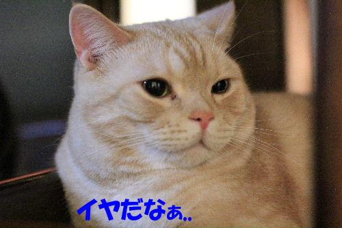 2011年10月黒目8.JPG