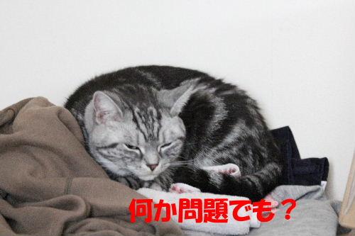 2011年10月黒3.JPG