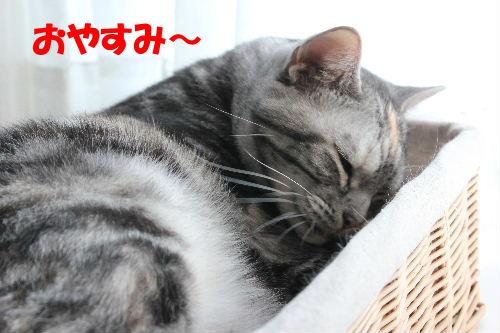 2011年12月すき2-7.JPG