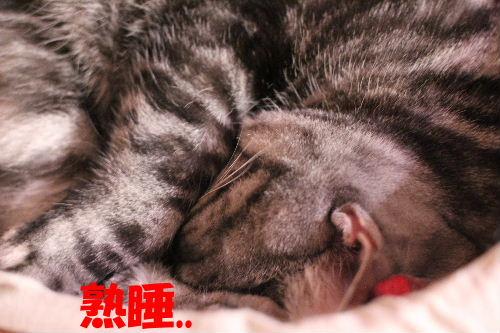 2011年12月まる2-4.JPG
