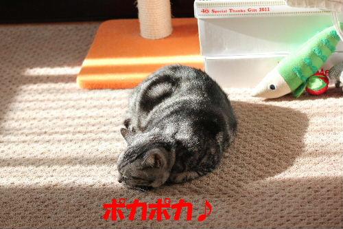 2011年12月光2.JPG