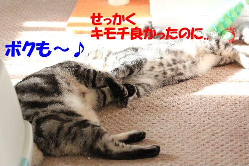 2011年12月光3.JPG