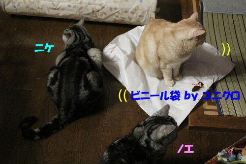 2011年12月敷く2-2.JPG