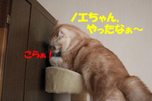 2011年1月お相手5.JPG