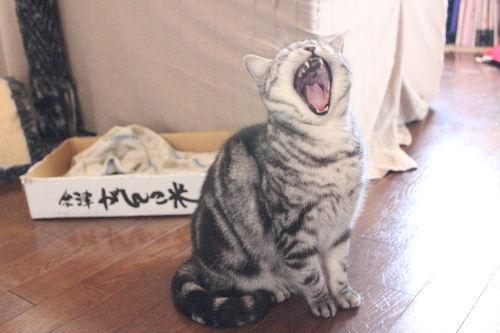 2011年3月ごちそう4.JPG