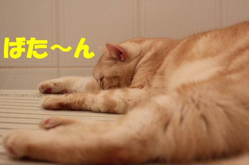 2011年4月お風呂場0.JPG