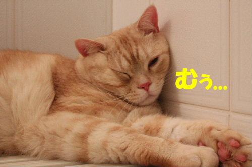 2011年4月お風呂場6.JPG