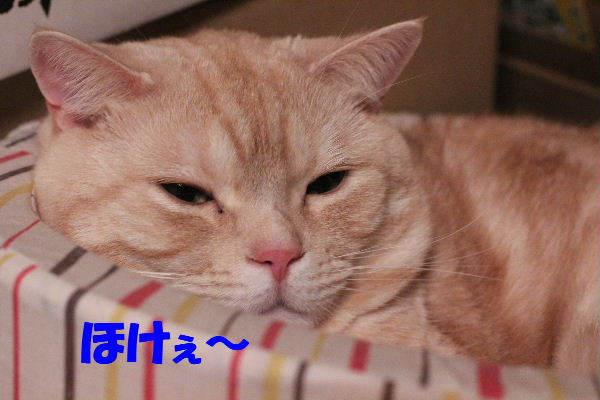 2011年4月むち4.JPG