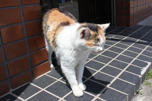 2011年4月三崎4.JPG