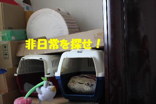 2011年5月ころ1.JPG