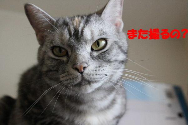 2011年5月ころ7.JPG