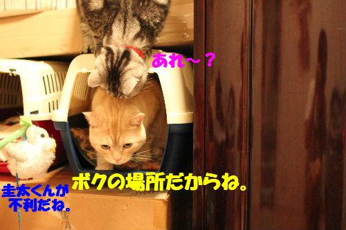 2011年5月イン2.JPG