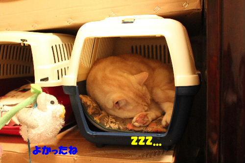 2011年5月イン3.JPG
