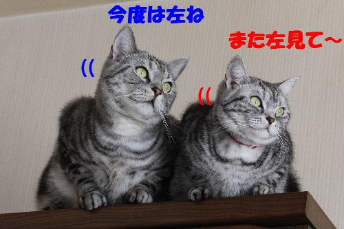 2011年5月シンクロ4.JPG
