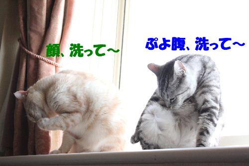 2011年5月シンクロ7.JPG