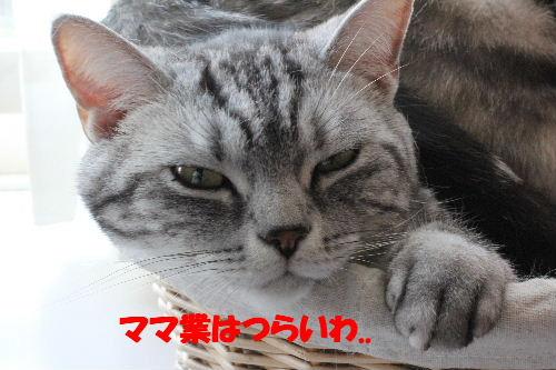 2011年5月一緒6.JPG