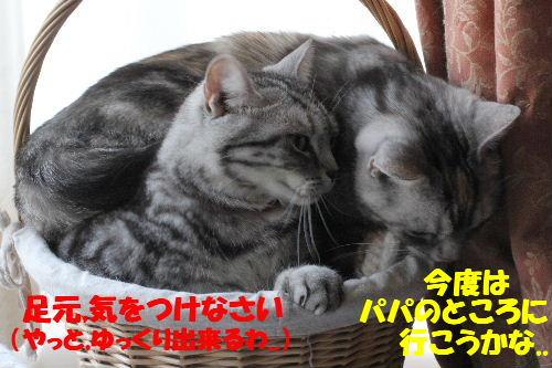 2011年5月一緒8.JPG