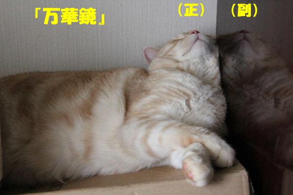 2011年5月万華鏡6.JPG