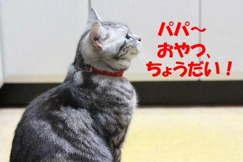 2011年6月ノビ8.JPG