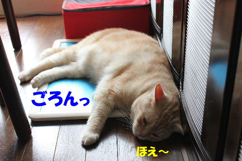 2011年6月暑2.JPG