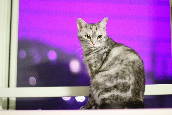 2011年6月紫8.JPG