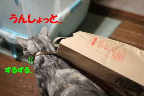 2011年6月肝3.JPG