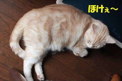 2011年6月触り2.JPG