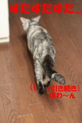 2011年7月アル2.JPG