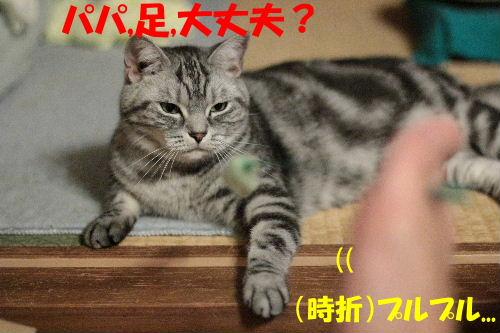 2011年7月ノエ6.JPG