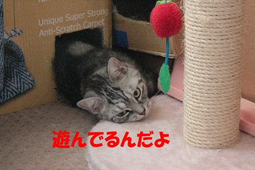 2011年7月ヤマト1.JPG
