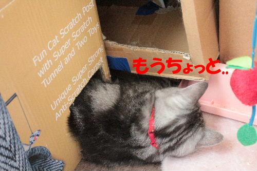 2011年7月ヤマト1-3.JPG