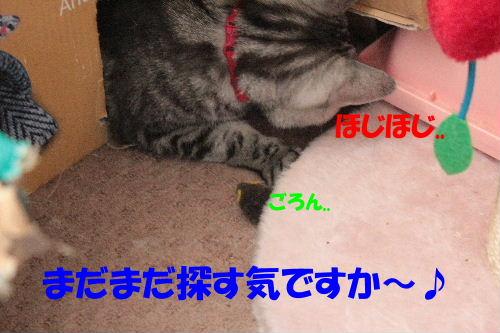 2011年7月ヤマト1-5.JPG